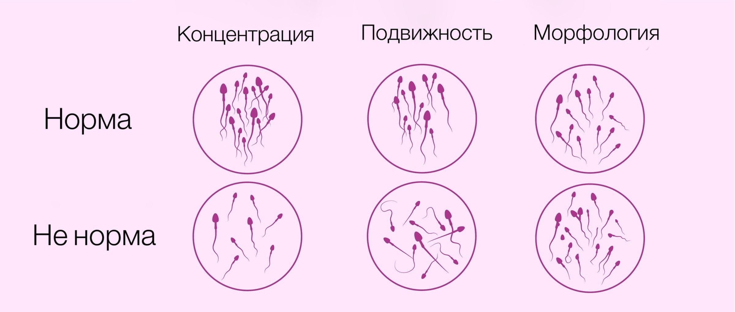 концентрация сперматозоидов в организме человека