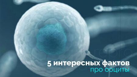 5 цікавих фактів про ооцити